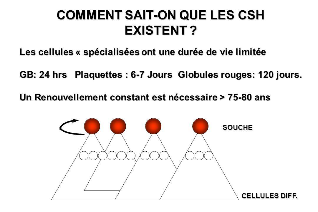 COMMENT SAIT-ON QUE LES CSH EXISTENT ? Les cellules « spécialisées ont une durée de vie limitée GB: 24 hrs Plaquettes : 6-7 Jours Globules rouges: 120