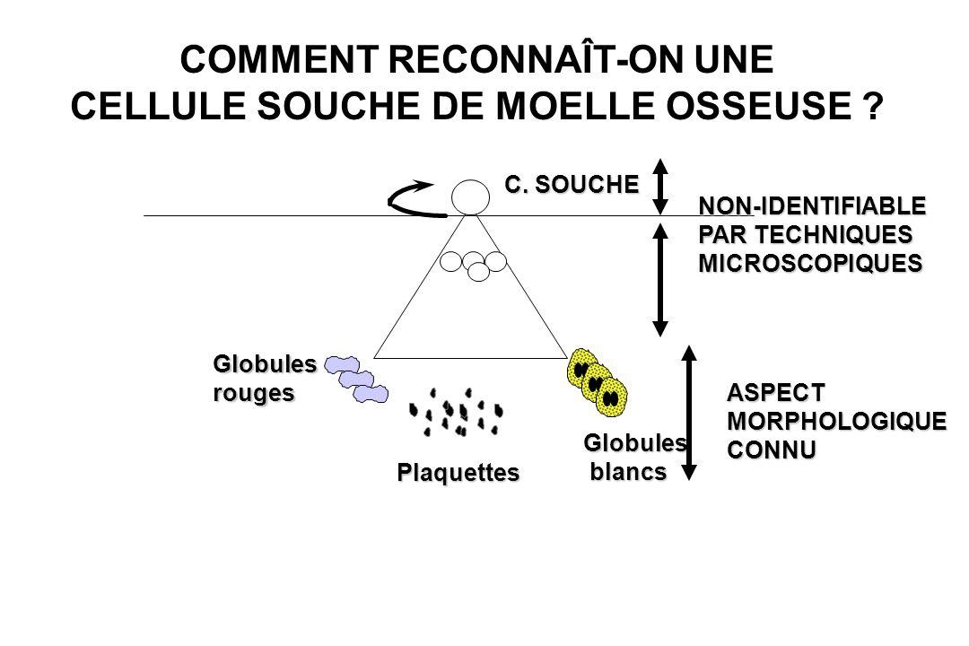 COMMENT RECONNAÎT-ON UNE CELLULE SOUCHE DE MOELLE OSSEUSE ? Globulesrouges Plaquettes Globules blancs blancs C. SOUCHE NON-IDENTIFIABLE PAR TECHNIQUES