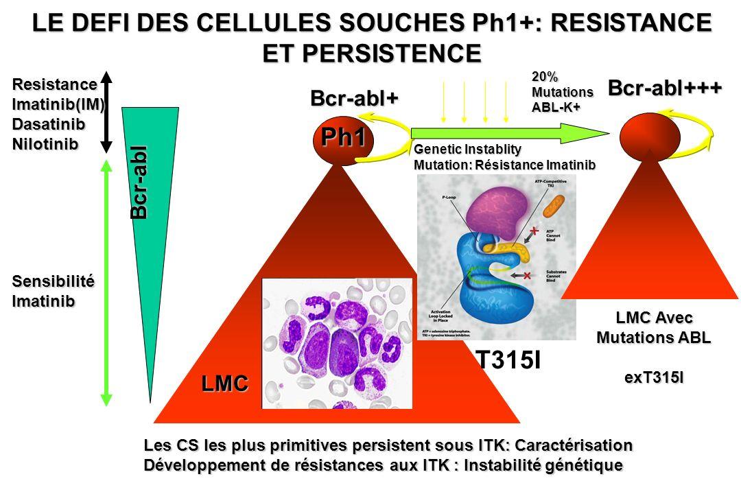 LE DEFI DES CELLULES SOUCHES Ph1+: RESISTANCE ET PERSISTENCE Ph1 Bcr-abl+ ResistanceImatinib(IM)DasatinibNilotinib SensibilitéImatinib 20%MutationsABL