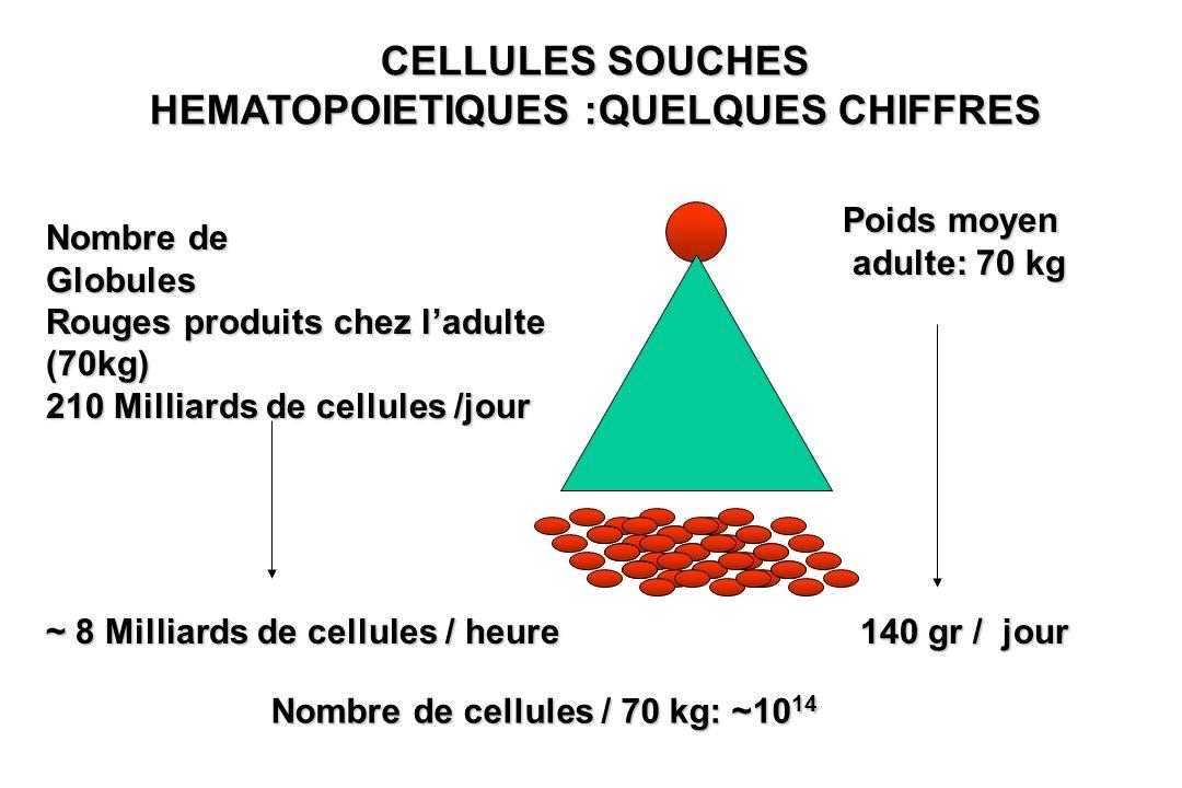 CELLULES SOUCHES HEMATOPOIETIQUES :QUELQUES CHIFFRES Nombre de Globules Rouges produits chez ladulte (70kg) 210 Milliards de cellules /jour Poids moye