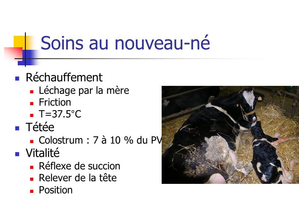 Soins au nouveau-né Réchauffement Léchage par la mère Friction T=37.5°C Tétée Colostrum : 7 à 10 % du PV Vitalité Réflexe de succion Relever de la tête Position