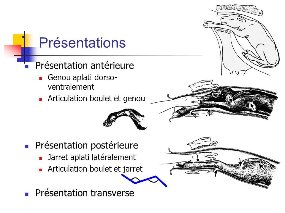 Présentations Présentation antérieure Genou aplati dorso- ventralement Articulation boulet et genou Présentation postérieure Jarret aplati latéralemen