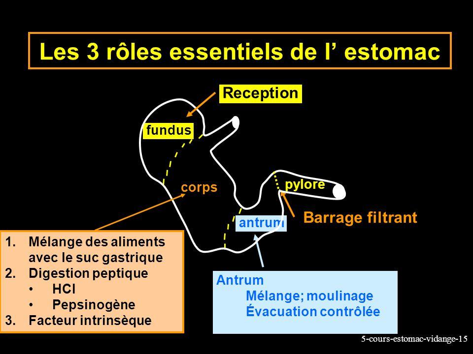5-cours-estomac-vidange-15 Les 3 rôles essentiels de l estomac fundus corps antrum Reception pylore Antrum Mélange; moulinage Évacuation contrôlée Bar