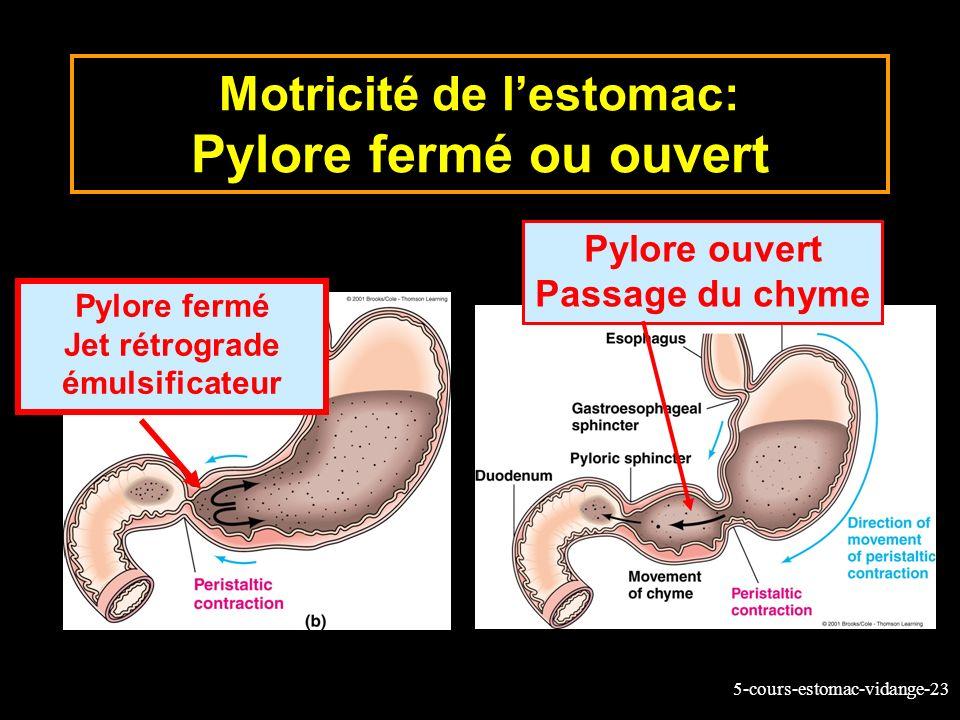 5-cours-estomac-vidange-23 Motricité de lestomac: Pylore fermé ou ouvert Pylore fermé Jet rétrograde émulsificateur Pylore ouvert Passage du chyme