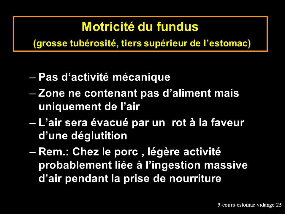 5-cours-estomac-vidange-25 Motricité du fundus (grosse tubérosité, tiers supérieur de lestomac) –Pas dactivité mécanique –Zone ne contenant pas dalime