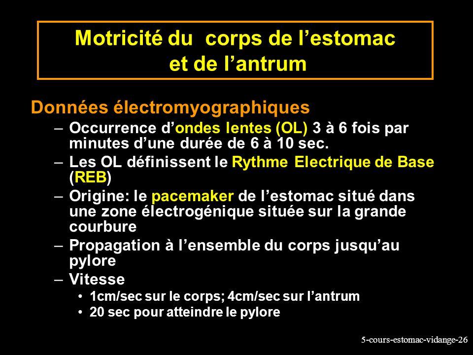5-cours-estomac-vidange-26 Motricité du corps de lestomac et de lantrum Données électromyographiques –Occurrence dondes lentes (OL) 3 à 6 fois par min