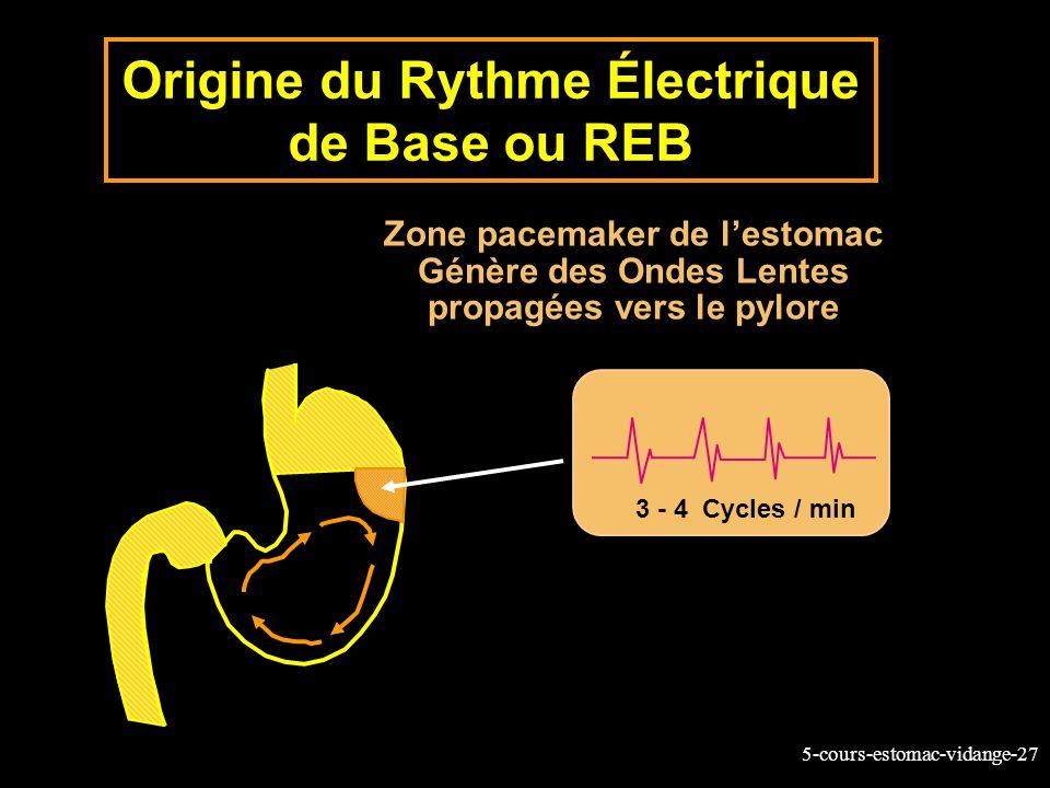 5-cours-estomac-vidange-27 Origine du Rythme Électrique de Base ou REB 3 - 4 Cycles / min Zone pacemaker de lestomac Génère des Ondes Lentes propagées