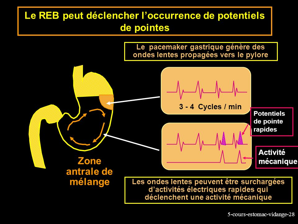 5-cours-estomac-vidange-28 Le REB peut déclencher loccurrence de potentiels de pointes 3 - 4 Cycles / min Zone antrale de mélange Le pacemaker gastriq