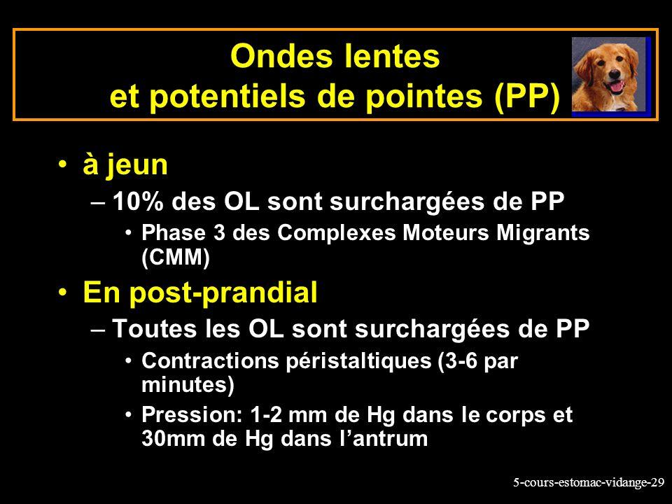 5-cours-estomac-vidange-29 Ondes lentes et potentiels de pointes (PP) à jeun –10% des OL sont surchargées de PP Phase 3 des Complexes Moteurs Migrants