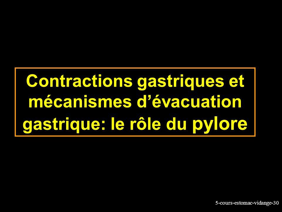 5-cours-estomac-vidange-30 Contractions gastriques et mécanismes dévacuation gastrique: le rôle du pylore