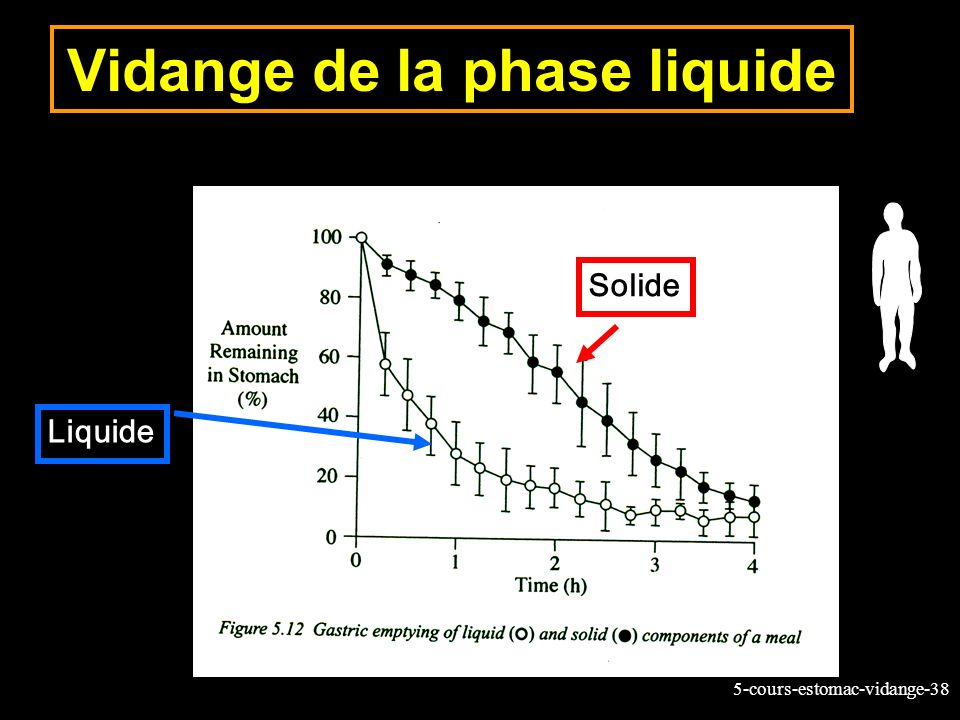 5-cours-estomac-vidange-38 Vidange de la phase liquide Liquide Solide