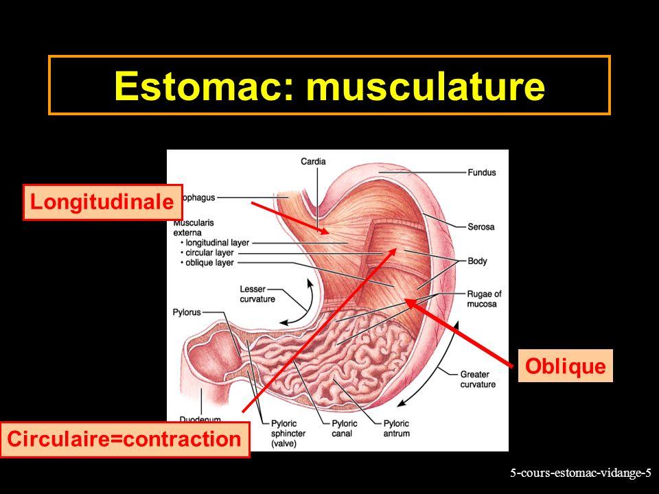 5-cours-estomac-vidange-5 Estomac: musculature Longitudinale Circulaire=contraction Oblique