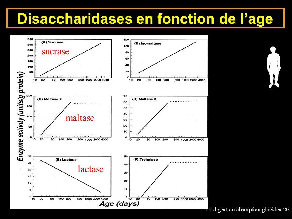 14-digestion-absorption-glucides-20 Disaccharidases en fonction de lage lactase sucrase maltase