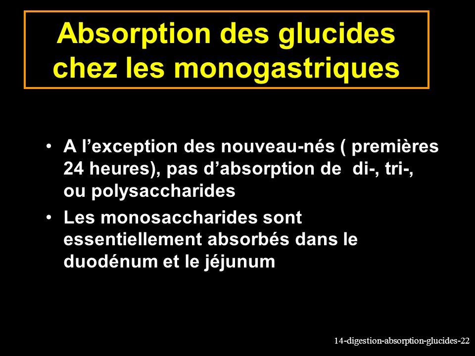 14-digestion-absorption-glucides-22 Absorption des glucides chez les monogastriques A lexception des nouveau-nés ( premières 24 heures), pas dabsorpti