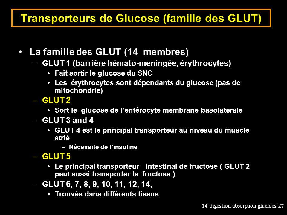 14-digestion-absorption-glucides-27 Transporteurs de Glucose (famille des GLUT) La famille des GLUT (14 membres) –GLUT 1 (barrière hémato-meningée, ér