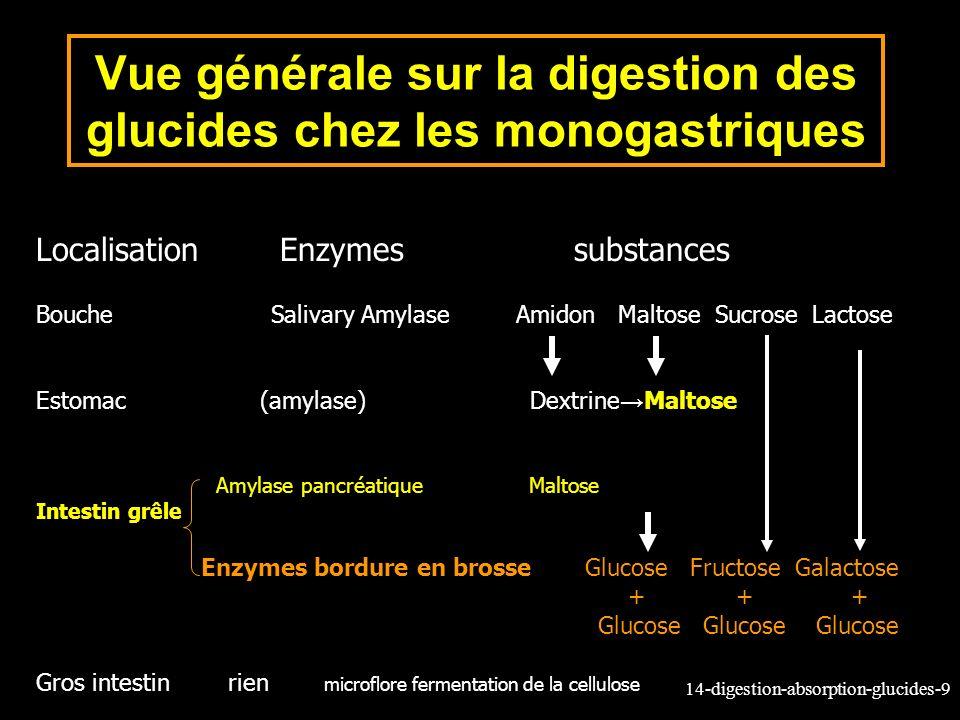 14-digestion-absorption-glucides-9 Localisation Enzymes substances Bouche Salivary Amylase Amidon Maltose Sucrose Lactose Estomac (amylase) Dextrine M
