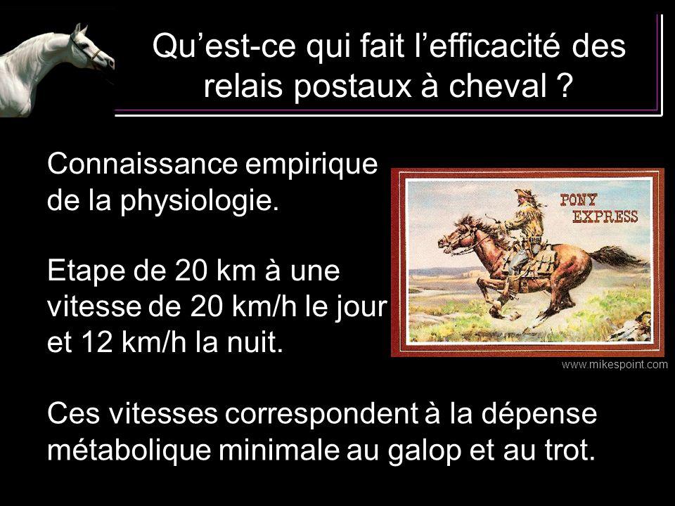 Quest-ce qui fait lefficacité des relais postaux à cheval ? Connaissance empirique de la physiologie. Etape de 20 km à une vitesse de 20 km/h le jour