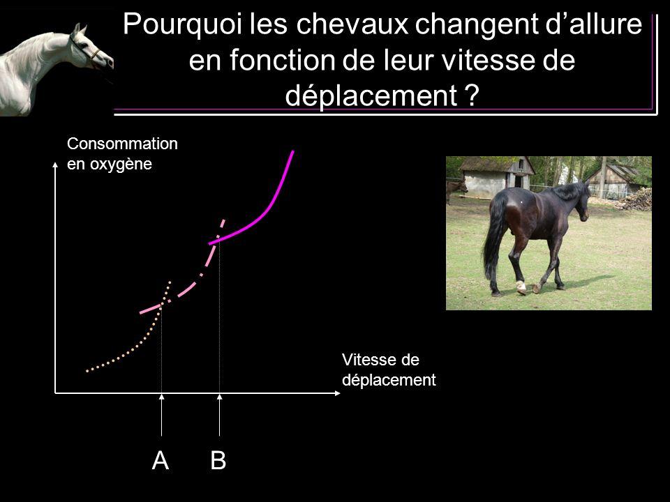 Pourquoi les chevaux changent dallure en fonction de leur vitesse de déplacement ? Consommation en oxygène Vitesse de déplacement AB