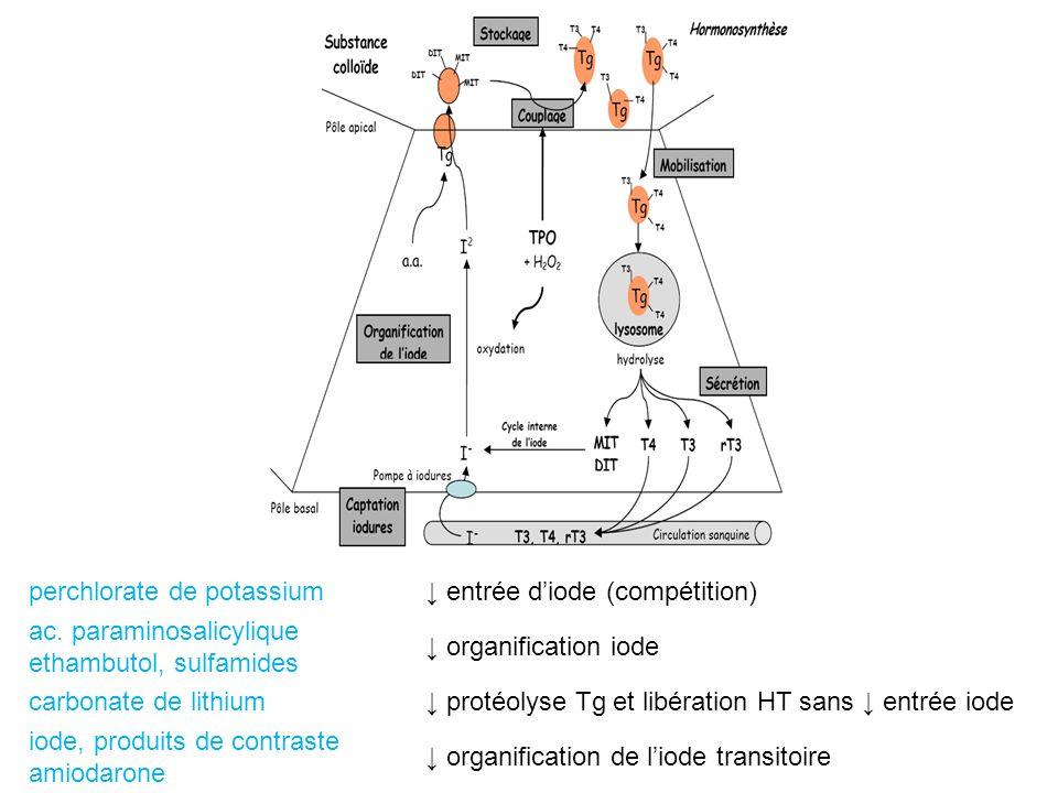 perchlorate de potassium entrée diode (compétition) ac. paraminosalicylique ethambutol, sulfamides organification iode carbonate de lithium protéolyse