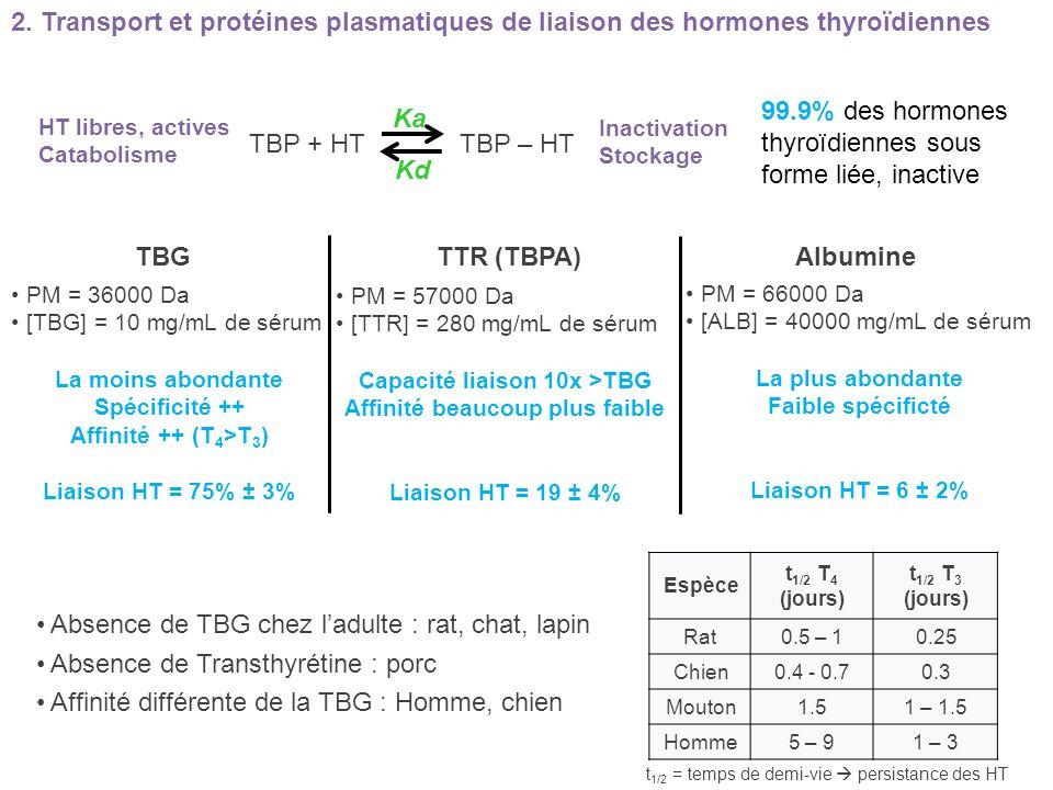 2. Transport et protéines plasmatiques de liaison des hormones thyroïdiennes TBGTTR (TBPA) Albumine PM = 36000 Da [TBG] = 10 mg/mL de sérum La moins a