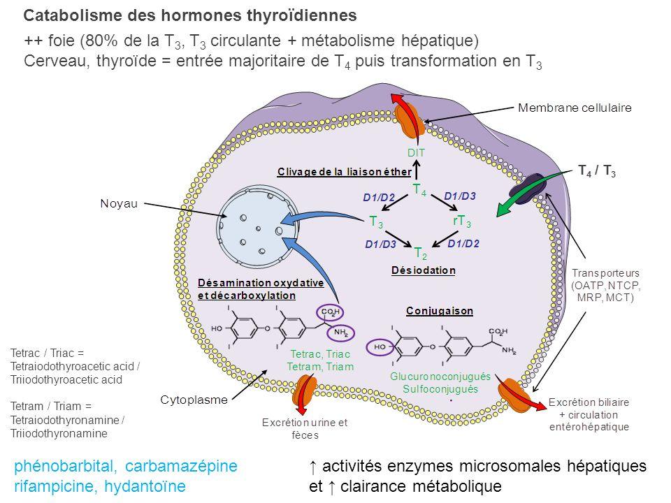 Catabolisme des hormones thyroïdiennes ++ foie (80% de la T 3, T 3 circulante + métabolisme hépatique) Cerveau, thyroïde = entrée majoritaire de T 4 p