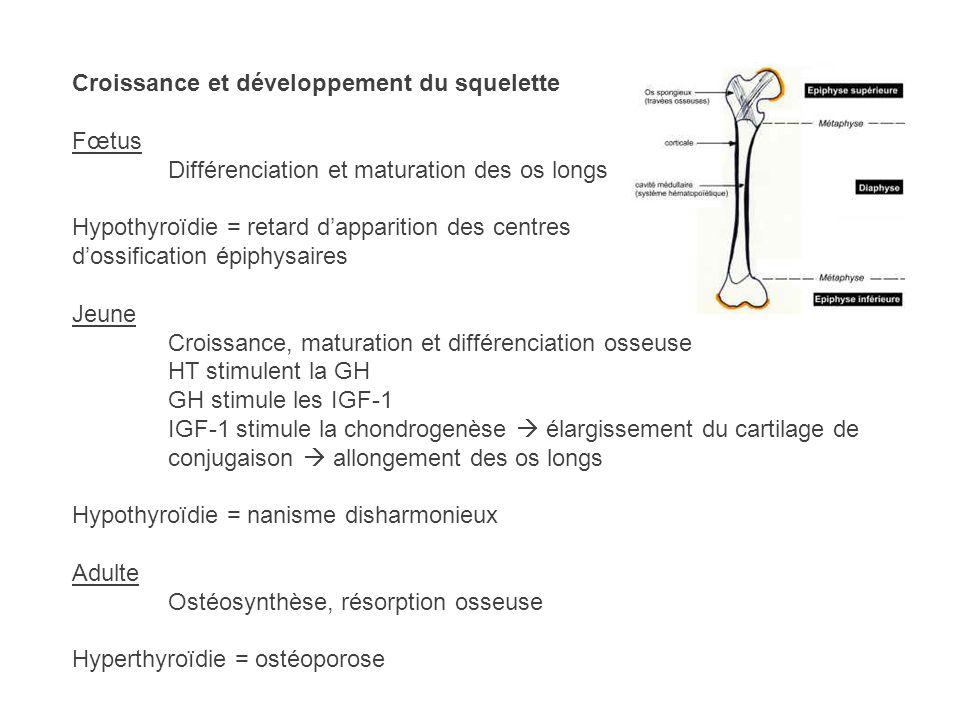 Croissance et développement du squelette Fœtus Différenciation et maturation des os longs Hypothyroïdie = retard dapparition des centres dossification