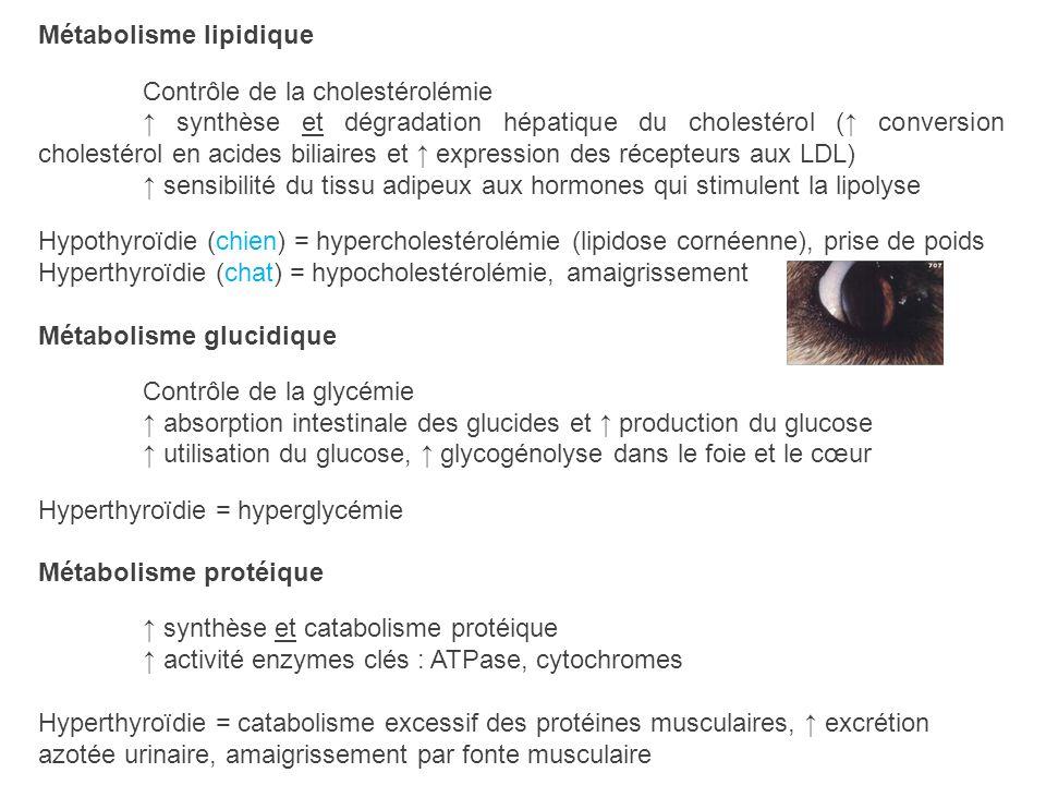 Métabolisme lipidique Contrôle de la cholestérolémie synthèse et dégradation hépatique du cholestérol ( conversion cholestérol en acides biliaires et