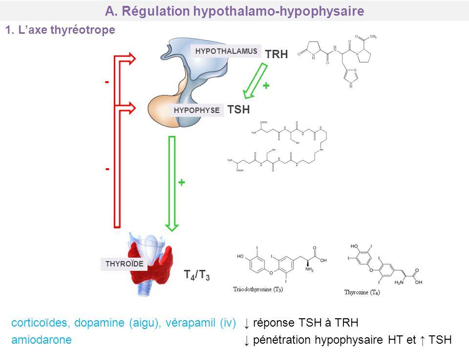 A. Régulation hypothalamo-hypophysaire 1. Laxe thyréotrope HYPOTHALAMUS HYPOPHYSE THYROÏDE TRH TSH T 4 /T 3 + + - - corticoïdes, dopamine (aigu), véra