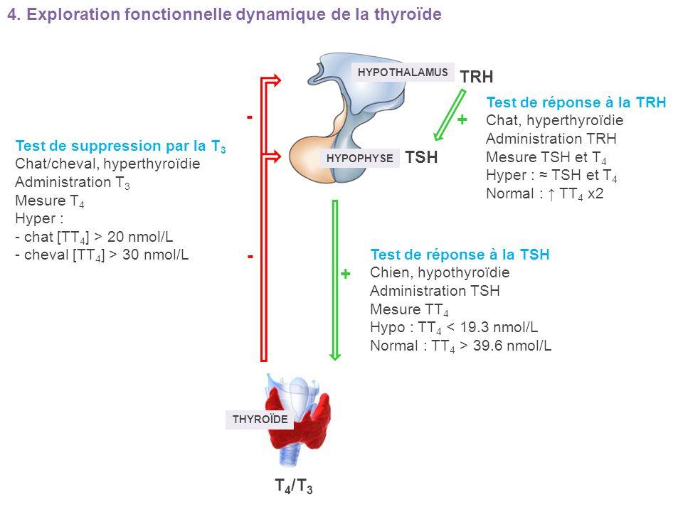 HYPOTHALAMUS HYPOPHYSE THYROÏDE TRH TSH T 4 /T 3 + + - - Test de réponse à la TRH Chat, hyperthyroïdie Administration TRH Mesure TSH et T 4 Hyper : TS