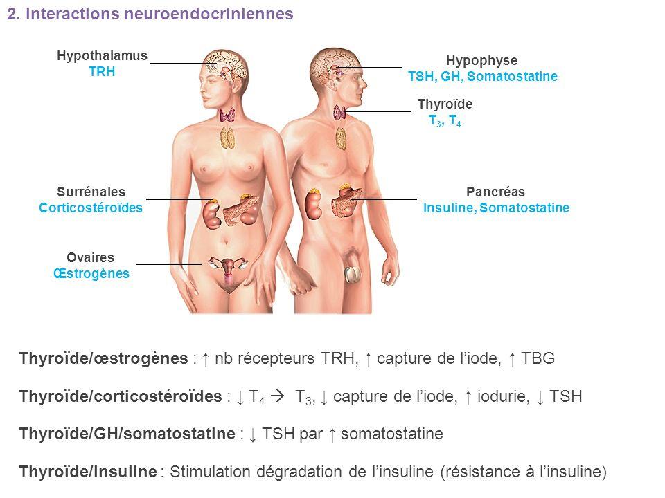 Thyroïde/œstrogènes : nb récepteurs TRH, capture de liode, TBG Thyroïde/corticostéroïdes : T 4 T 3, capture de liode, iodurie, TSH Thyroïde/GH/somatos