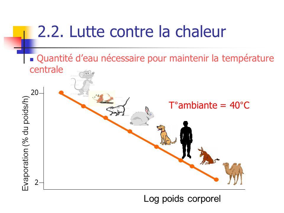 2.2. Lutte contre la chaleur Evaporation (% du poids/h) Log poids corporel Quantité deau nécessaire pour maintenir la température centrale T°ambiante