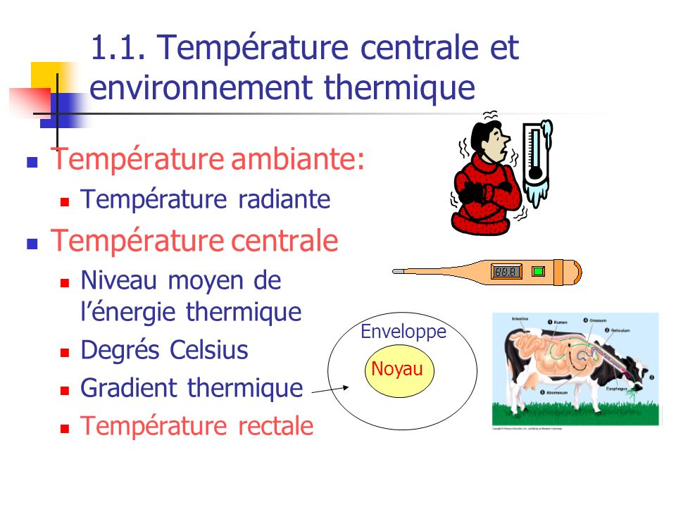 1.1. Température centrale et environnement thermique Température ambiante: Température radiante Température centrale Niveau moyen de lénergie thermiqu