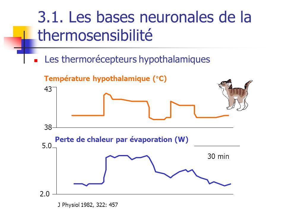 Les thermorécepteurs hypothalamiques 2.0 5.0 38 43 Température hypothalamique (°C) Perte de chaleur par évaporation (W) 30 min J Physiol 1982, 322: 45