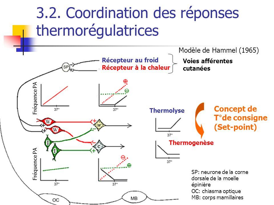 3.2. Coordination des réponses thermorégulatrices Récepteur au froid Récepteur à la chaleur Voies afférentes cutanées Thermolyse Thermogenèse Fréquenc