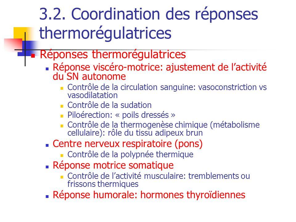 3.2. Coordination des réponses thermorégulatrices Réponses thermorégulatrices Réponse viscéro-motrice: ajustement de lactivité du SN autonome Contrôle