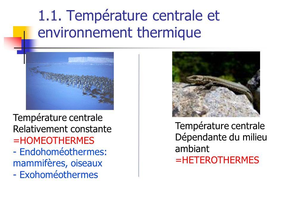 1.1. Température centrale et environnement thermique Température centrale Relativement constante =HOMEOTHERMES - Endohoméothermes: mammifères, oiseaux