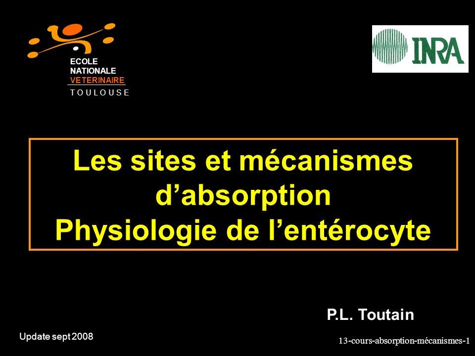 13-cours-absorption-mécanismes-2 Les sites dabsorption