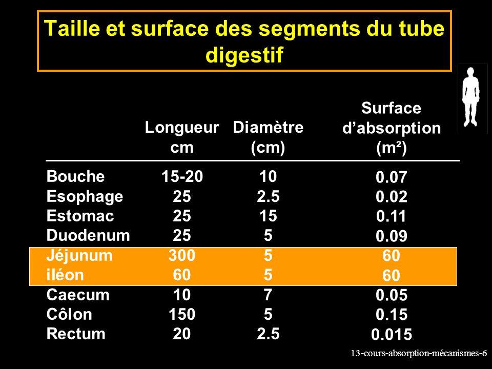13-cours-absorption-mécanismes-7 Amplification de la surface: Valvules, villosités et microvillosités de lintestin Valvules *3 Villosités *30 Microvillosités *600
