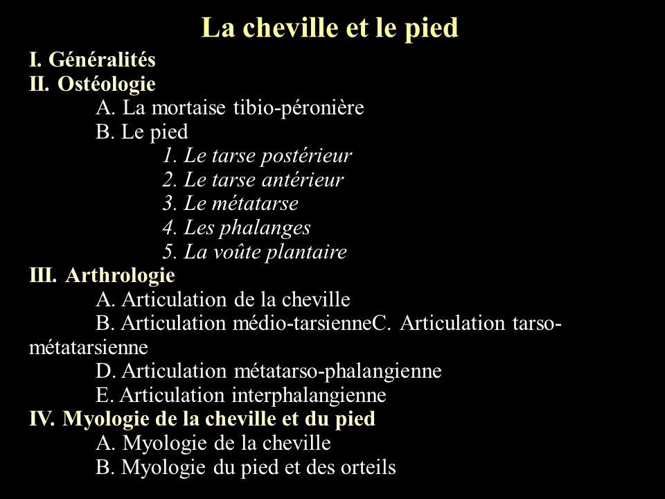 Arthrologie de la cheville Vue latérale Ligament astragalo- scaphoïdien