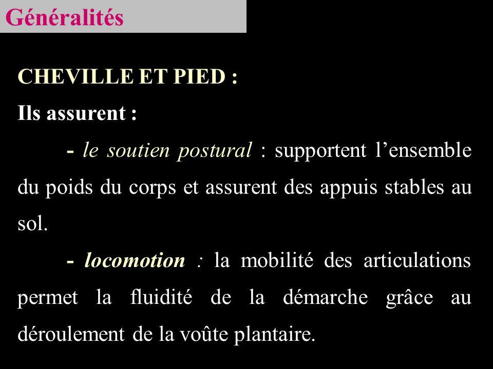 Soléaire Tête proximal du péroné + face postérieure du tibia Extenseurs de cheville Action : Flexion plantaire Tendon dAchille Lame tendineuse