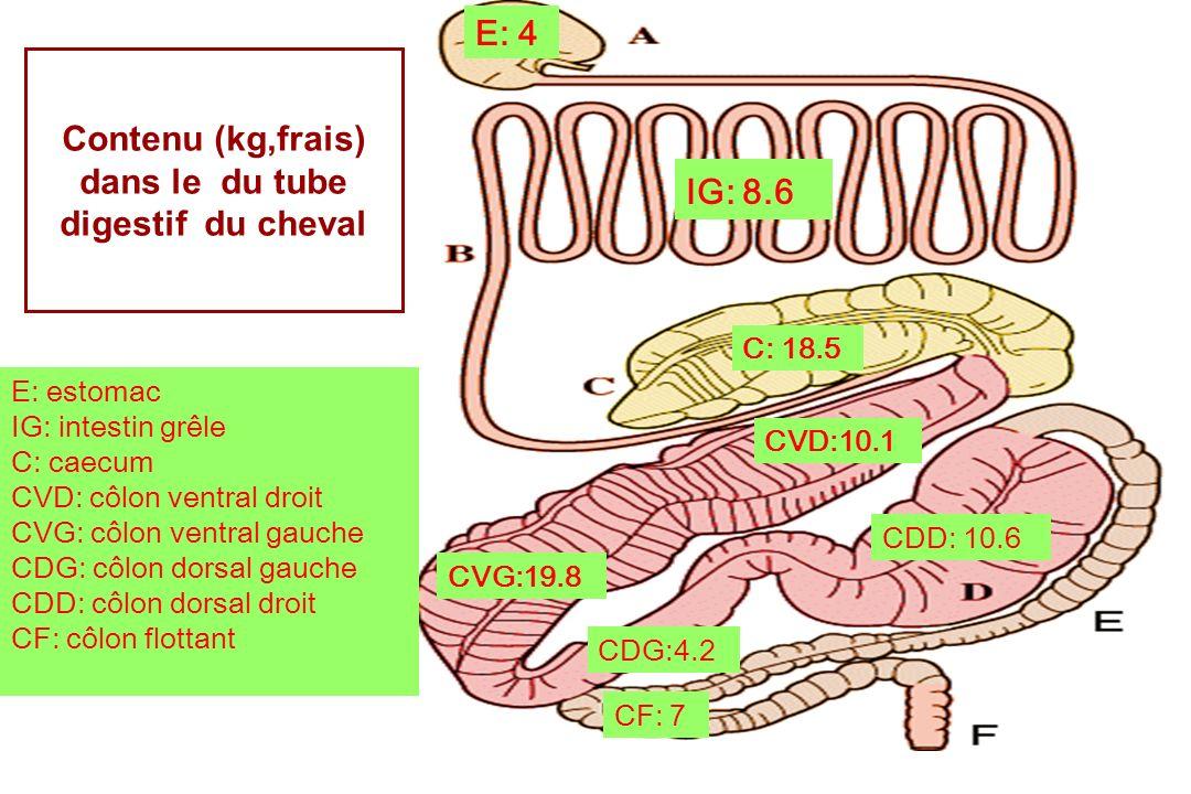Contenu (kg,frais) dans le du tube digestif du cheval E: 4 IG: 8.6 C: 18.5 CVD:10.1 CVG:19.8 CDG:4.2 CDD: 10.6 CF: 7 E: estomac IG: intestin grêle C: