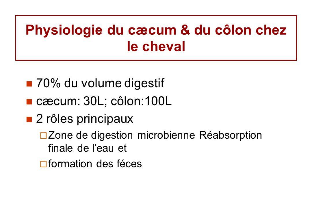 Physiologie du cæcum & du côlon chez le cheval 70% du volume digestif cæcum: 30L; côlon:100L 2 rôles principaux Zone de digestion microbienne Réabsorption finale de leau et formation des féces