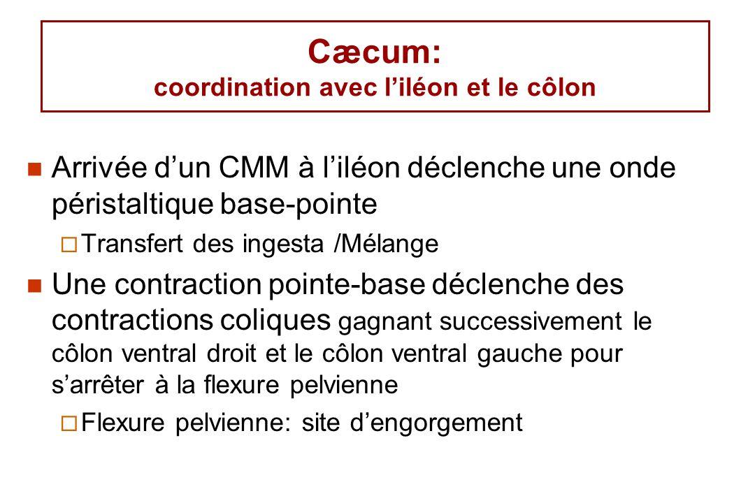 Cæcum: coordination avec liléon et le côlon Arrivée dun CMM à liléon déclenche une onde péristaltique base-pointe Transfert des ingesta /Mélange Une c