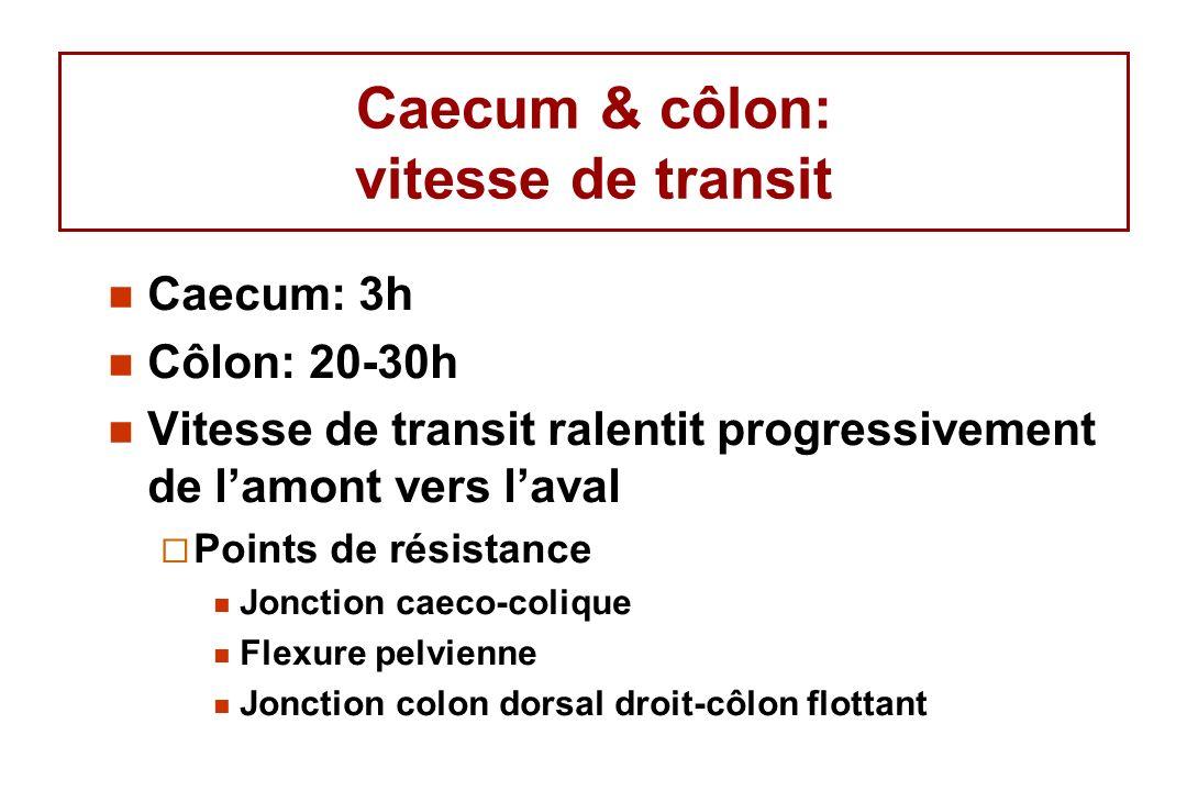 Caecum & côlon: vitesse de transit Caecum: 3h Côlon: 20-30h Vitesse de transit ralentit progressivement de lamont vers laval Points de résistance Jonction caeco-colique Flexure pelvienne Jonction colon dorsal droit-côlon flottant