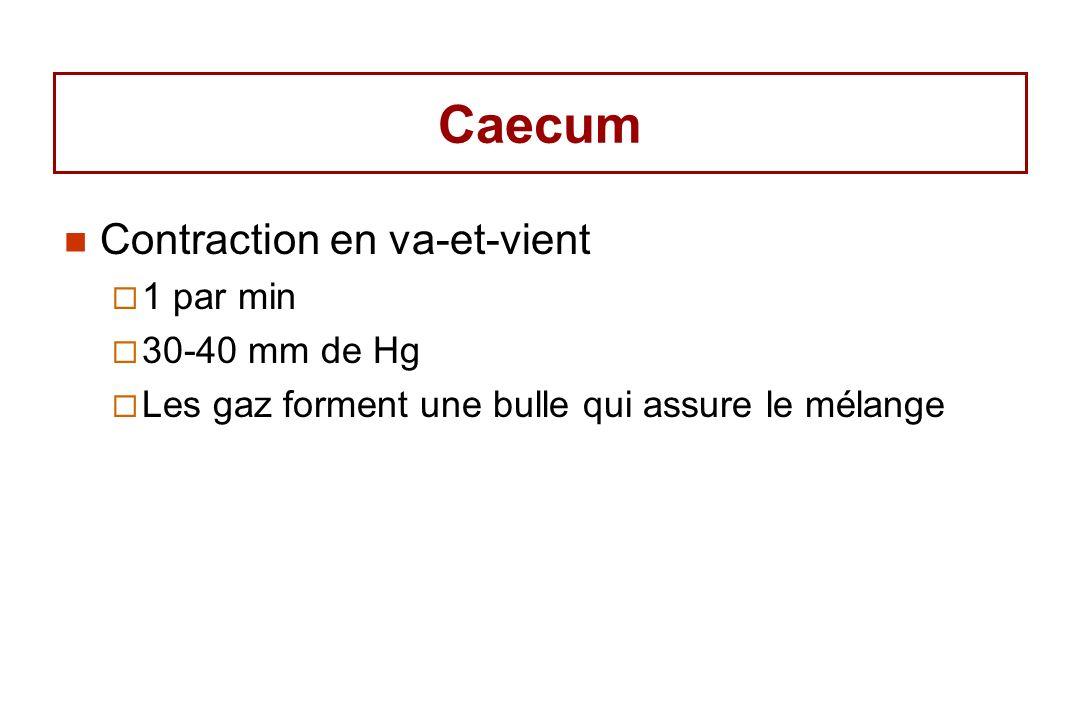 Caecum Contraction en va-et-vient 1 par min 30-40 mm de Hg Les gaz forment une bulle qui assure le mélange