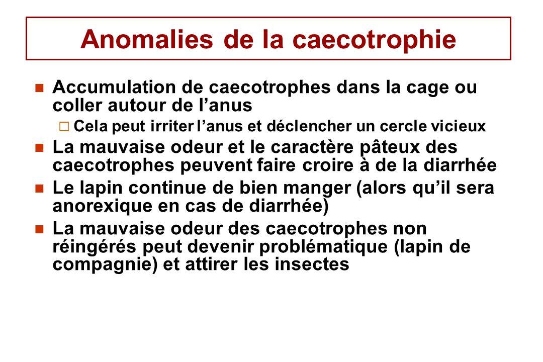 Anomalies de la caecotrophie Accumulation de caecotrophes dans la cage ou coller autour de lanus Cela peut irriter lanus et déclencher un cercle vicieux La mauvaise odeur et le caractère pâteux des caecotrophes peuvent faire croire à de la diarrhée Le lapin continue de bien manger (alors quil sera anorexique en cas de diarrhée) La mauvaise odeur des caecotrophes non réingérés peut devenir problématique (lapin de compagnie) et attirer les insectes