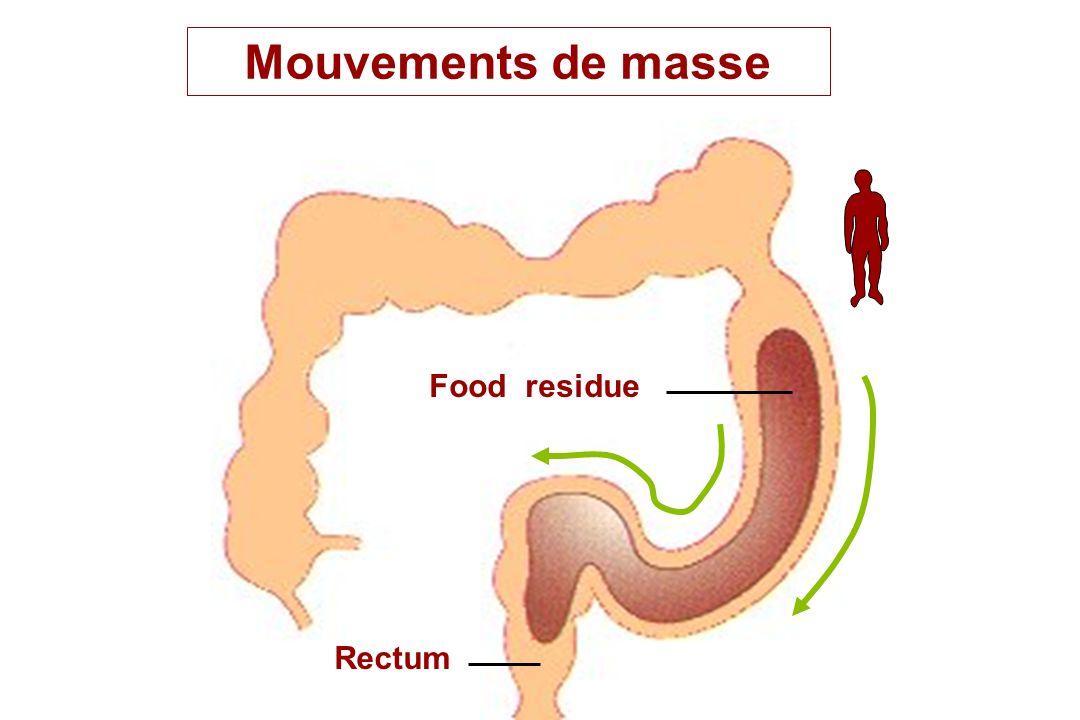 Mouvements de masse Food residue Rectum