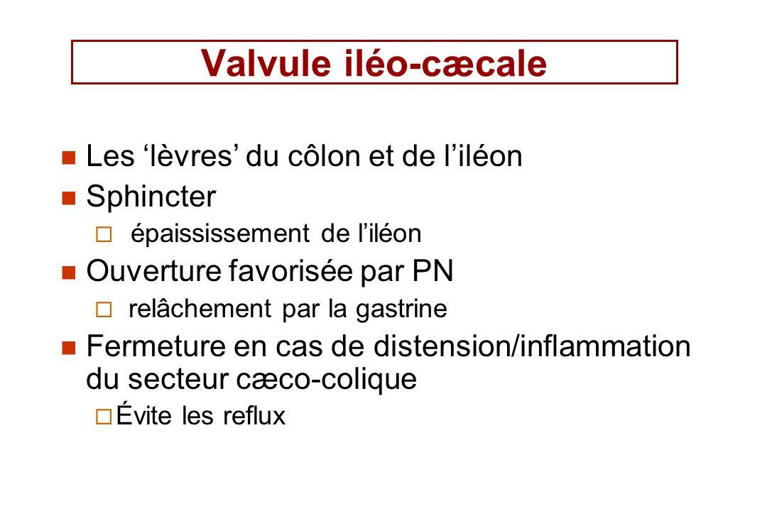 Les lèvres du côlon et de liléon Sphincter épaississement de liléon Ouverture favorisée par PN relâchement par la gastrine Fermeture en cas de distens