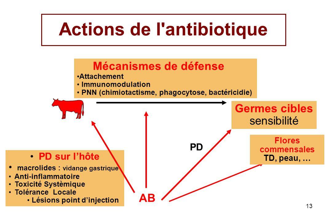 13 Actions de l'antibiotique Germes cibles sensibilité AB PD sur lhôte macrolides : vidange gastrique Anti-inflammatoire Toxicité Systèmique Tolérance