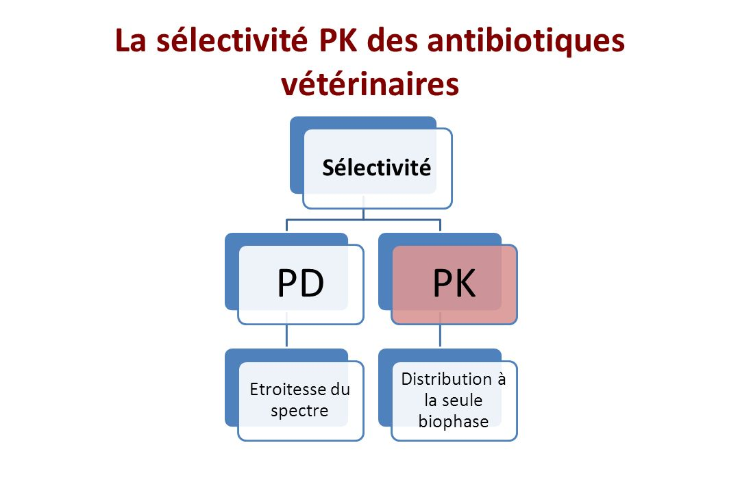 La sélectivité PK des antibiotiques vétérinaires Sélectivité PD Etroitesse du spectre PK Distribution à la seule biophase